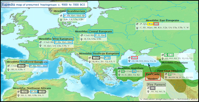 8000BCE-haplogroups